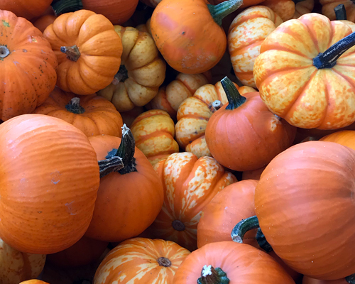 pumpkin patch tips